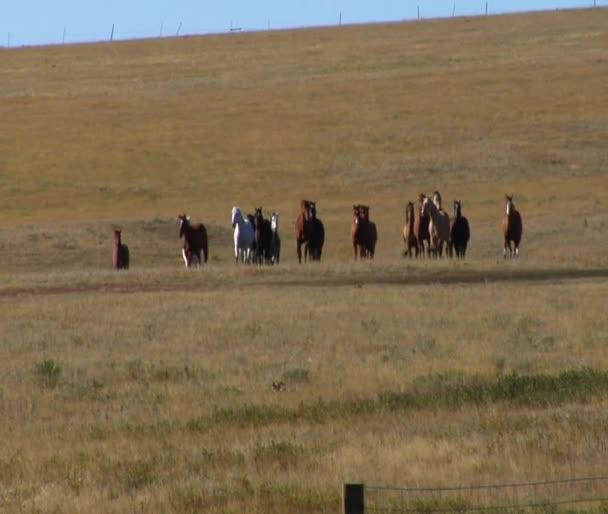 Koně přes široké pole