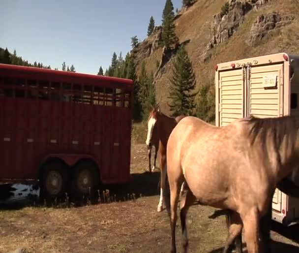 Koně chodit přívěsy