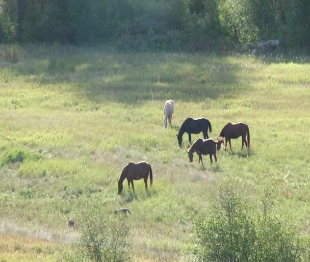egy békés, napsütötte pastire legeltetési lovak