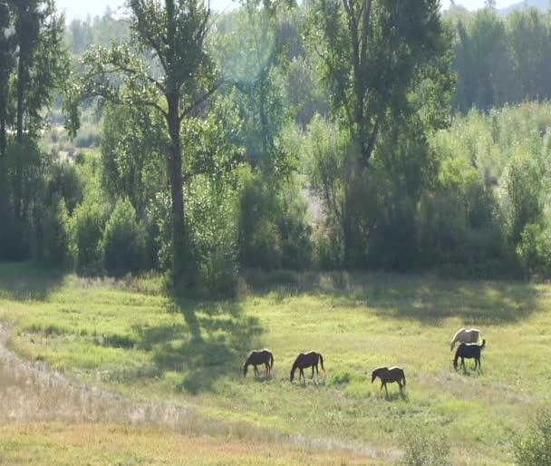 koně se pasou v klidné slunné pastviny