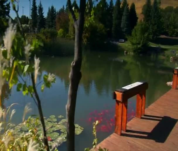 Díszes füvek és a tó
