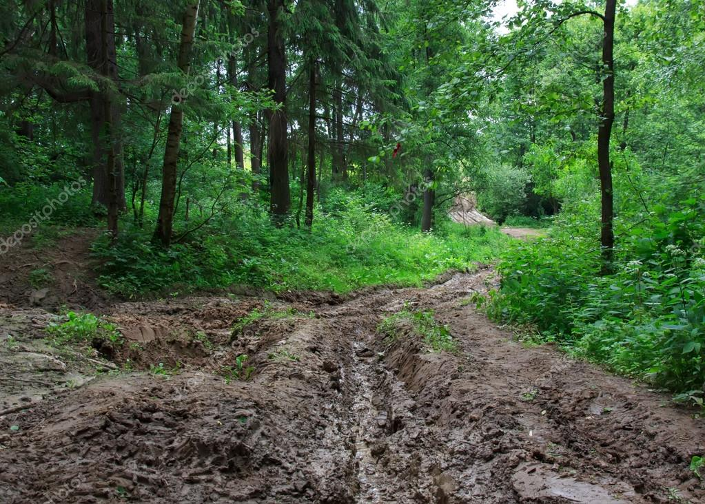Forest road of mud