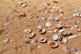 természetes kagyló, homokos strand.