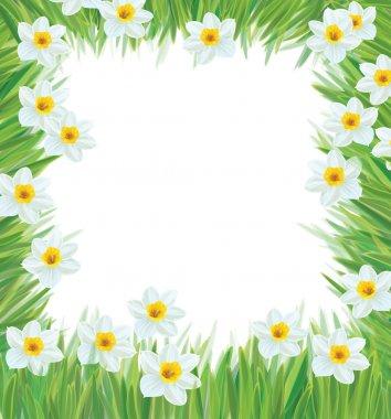 Vector of daffodil flowers frame for spring, Easter's design.