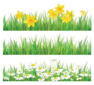 Vector of daffodil flowers, grass and chamomiles isolated for spring and Easter design.