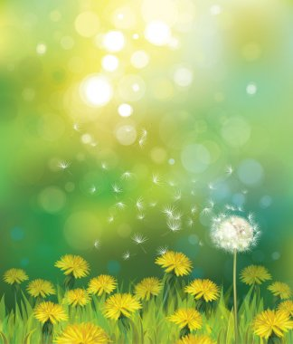 spring background with dandelions.