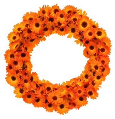 Calendula flowers circle shape isolated.
