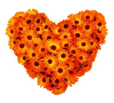 Calendula flowers heart shape isolated.