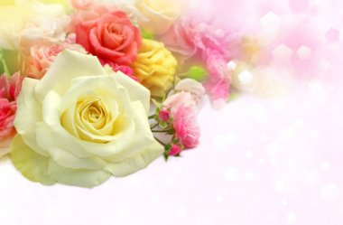 Roses flowers  background.