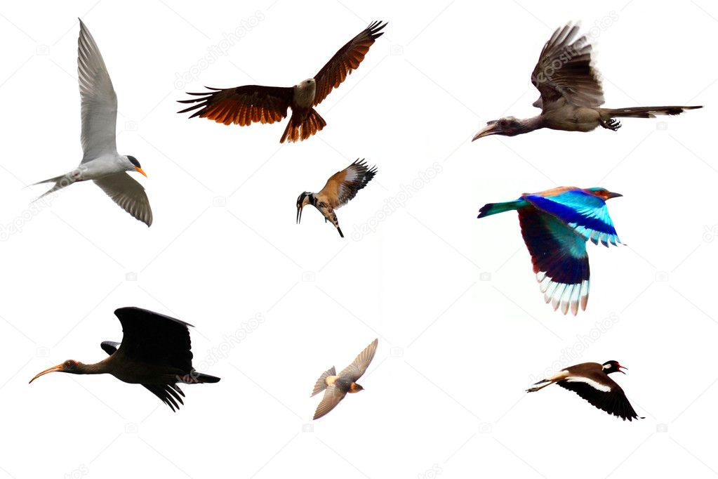 Different Species of Birds Flying