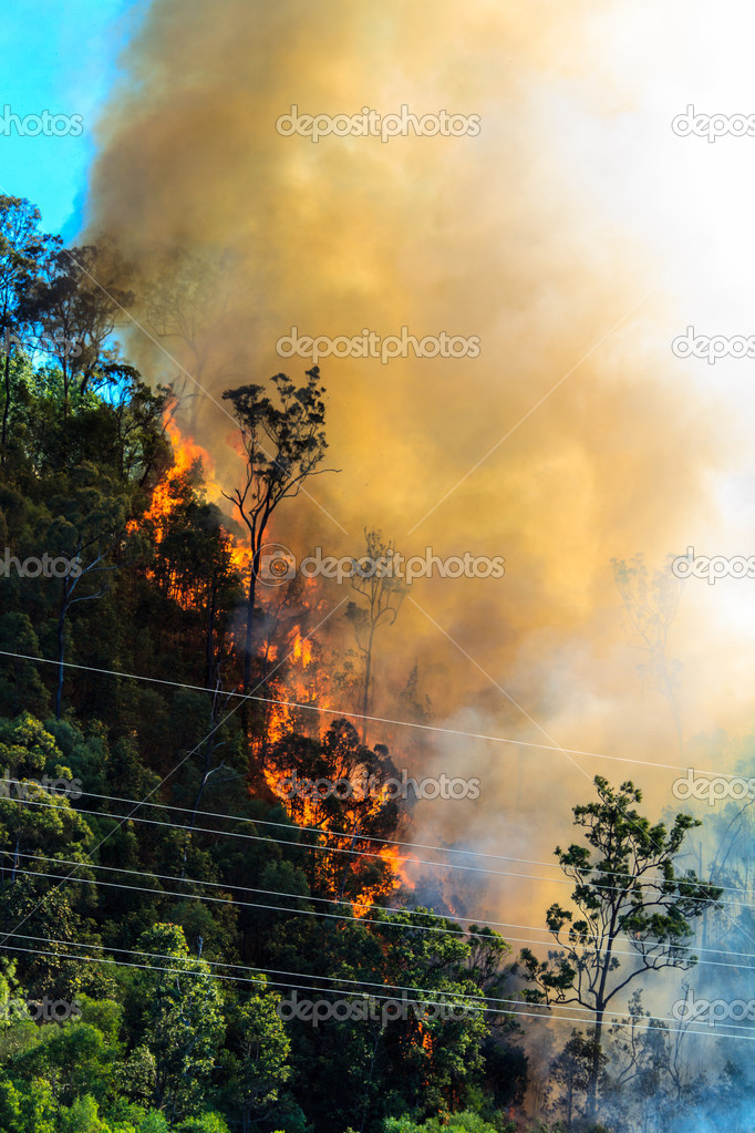 Burning Forest near Power Cables