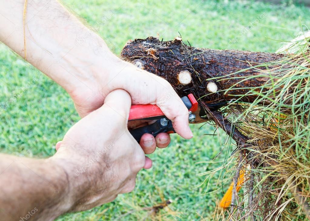 rama de hombre corte con unas tijeras de jardinería — Fotos de Stock ...