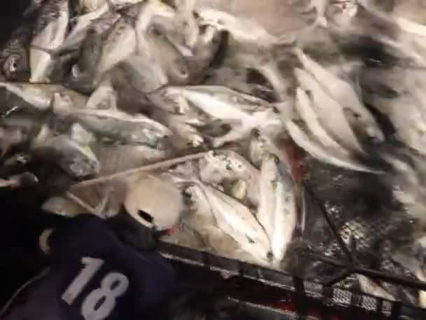 ryby v vlečné sítě