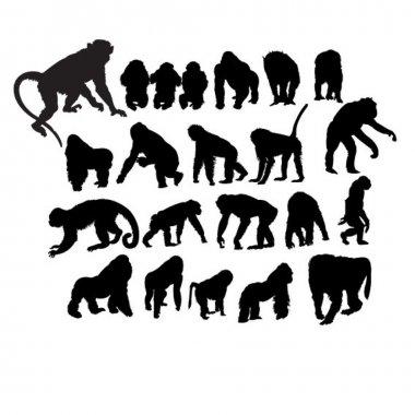 Set of different monkeys