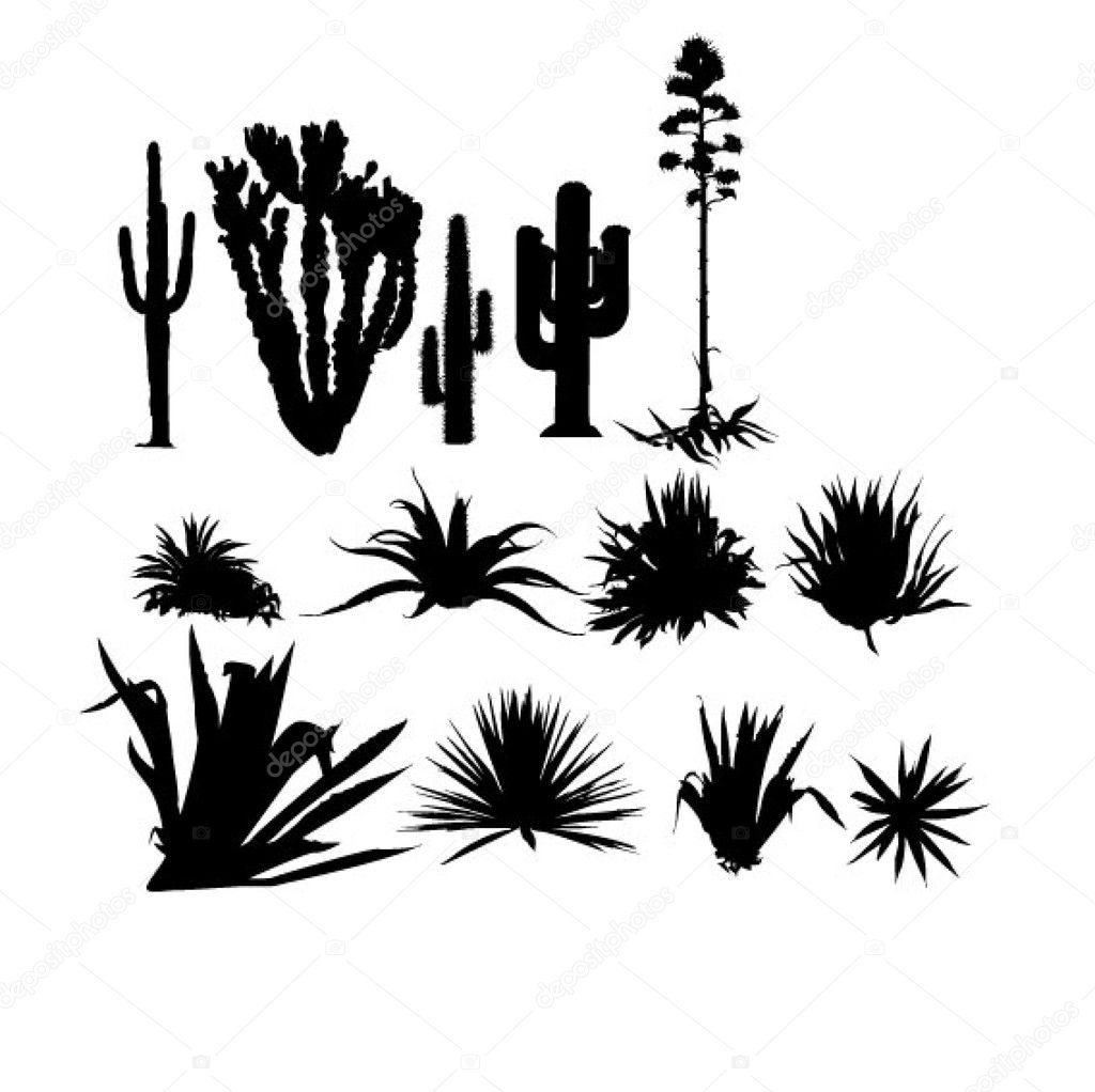 Agave and cactus set