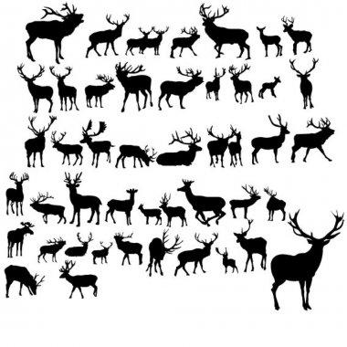 Set of black deer on white background