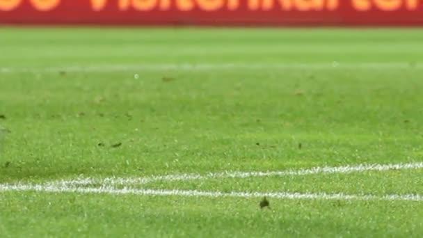 foci, vagy futball kapus