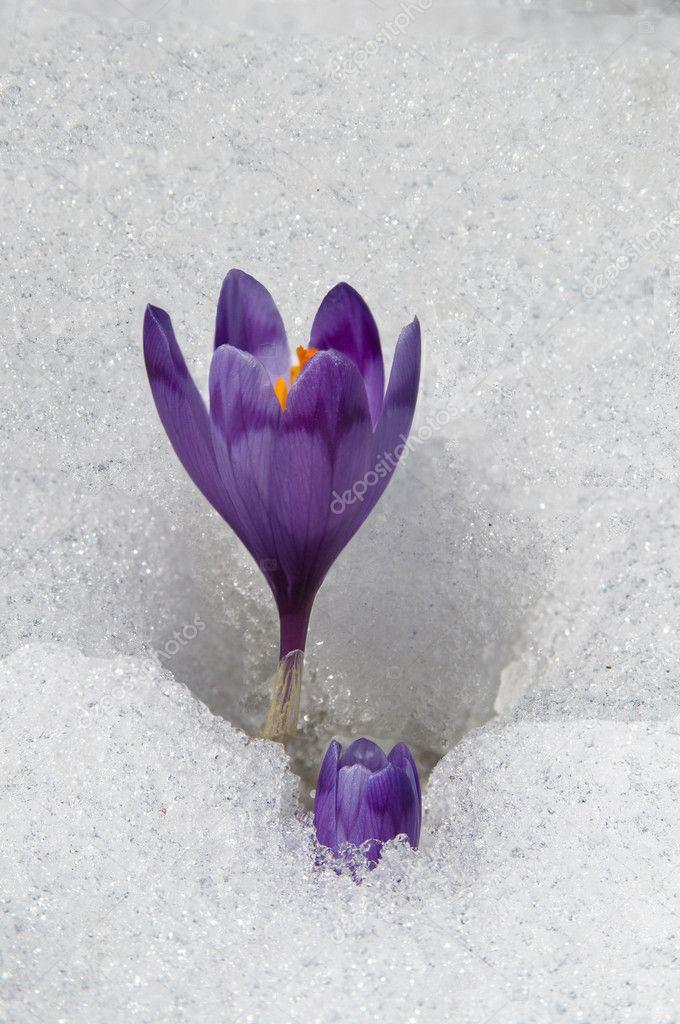 spring - flowers