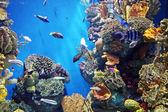 Fényképek A tenger alatti élet Acquarium