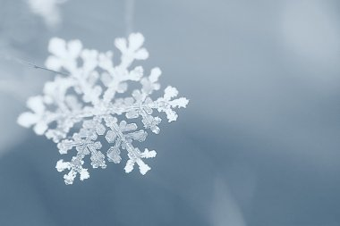 winter, snowflake, macro