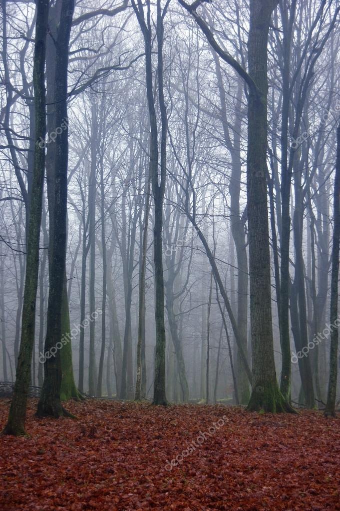 Фотообои creepy forest