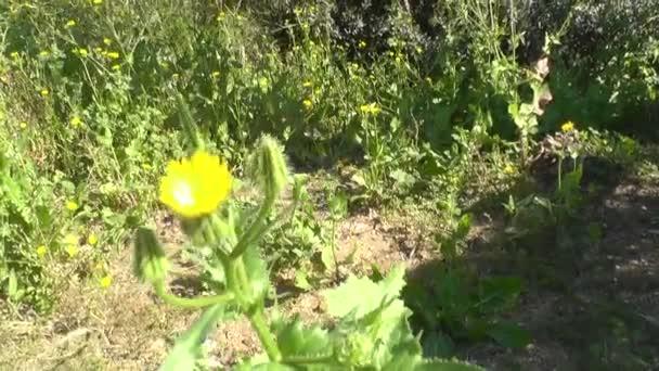 jarní květiny na pozadí