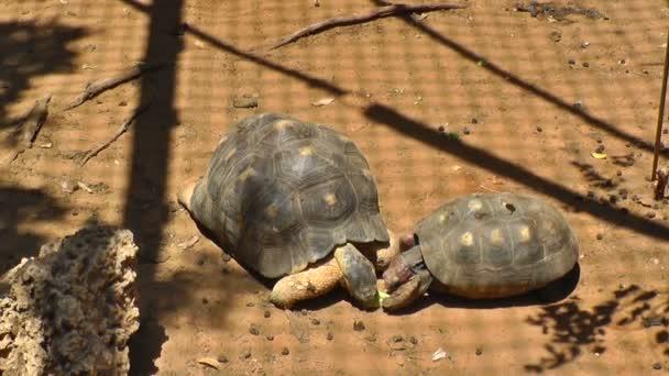 A teknősök, étkezés