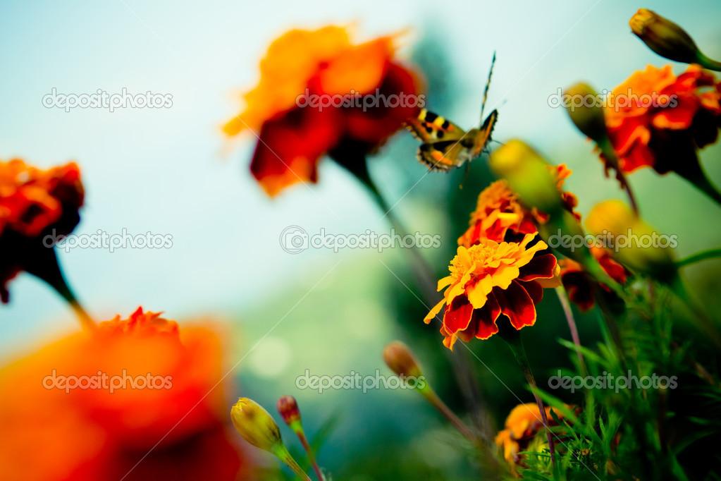 Resultado de imagem para borboletinha voando