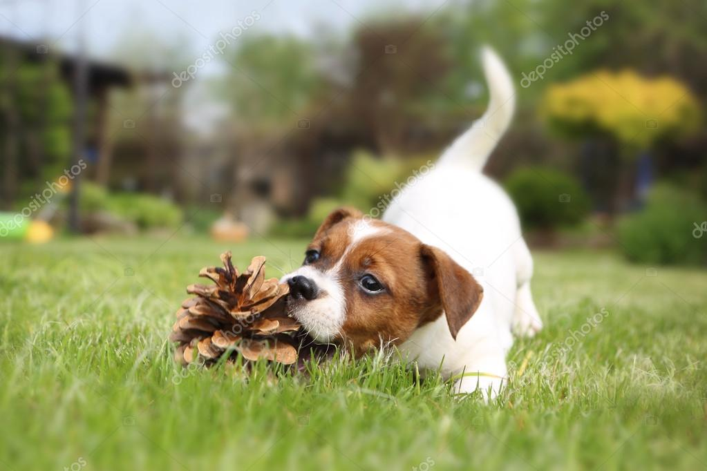 Puppy Play - dog bites cone