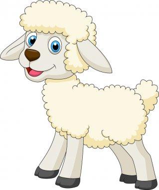 Cute sheep standing