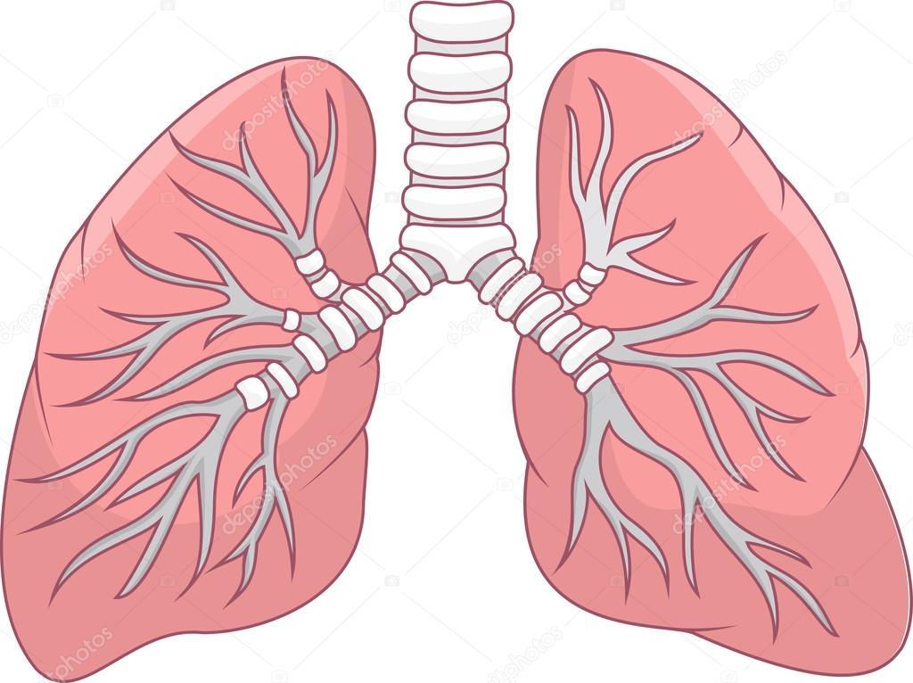 akciğer ile ilgili görsel sonucu