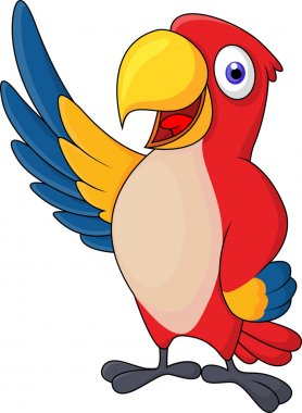 Cute macaw bird cartoon posing
