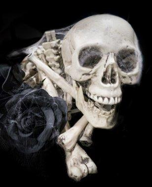 Skull and black rose