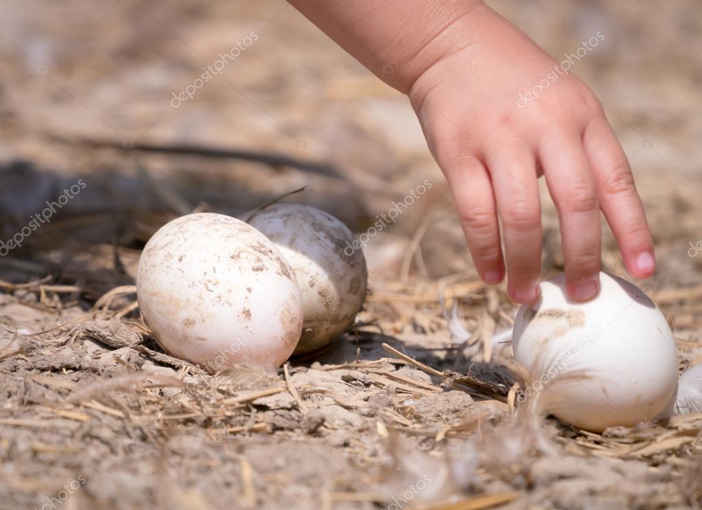 Fotos De Stock Chat9780: Mão De Criança, Pegando O Ovo No Chão