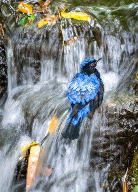 Bird taking a bath in the waterfall
