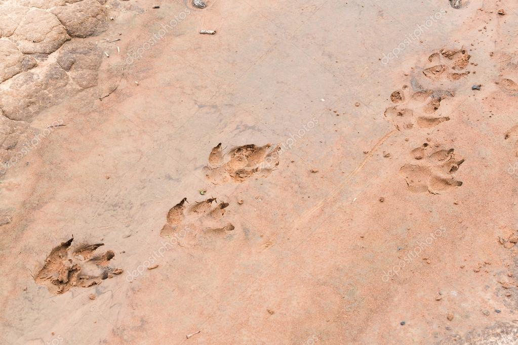 The dogs tracks