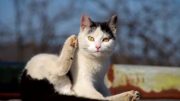 kočka na ploché střeše