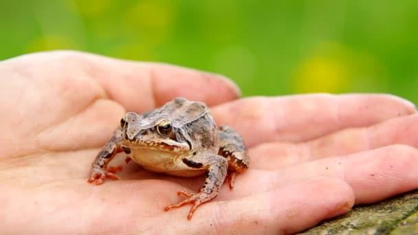 essbarer Frosch