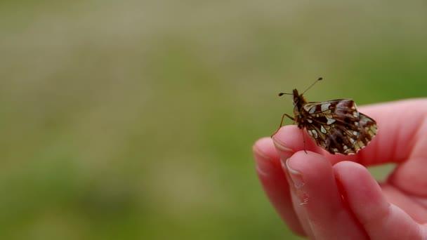 motýl v rukou dítěte