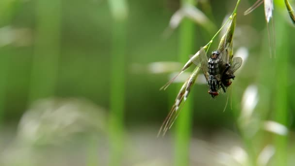 Flies mate on a green meadow
