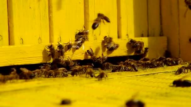 včely při vstupu do úlu
