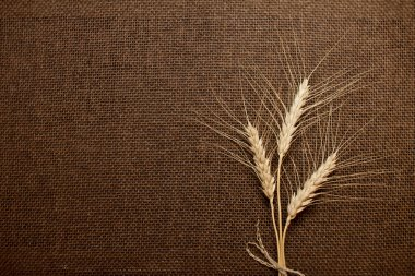 Wheat ears over brown canvas, hessian, burlap texture