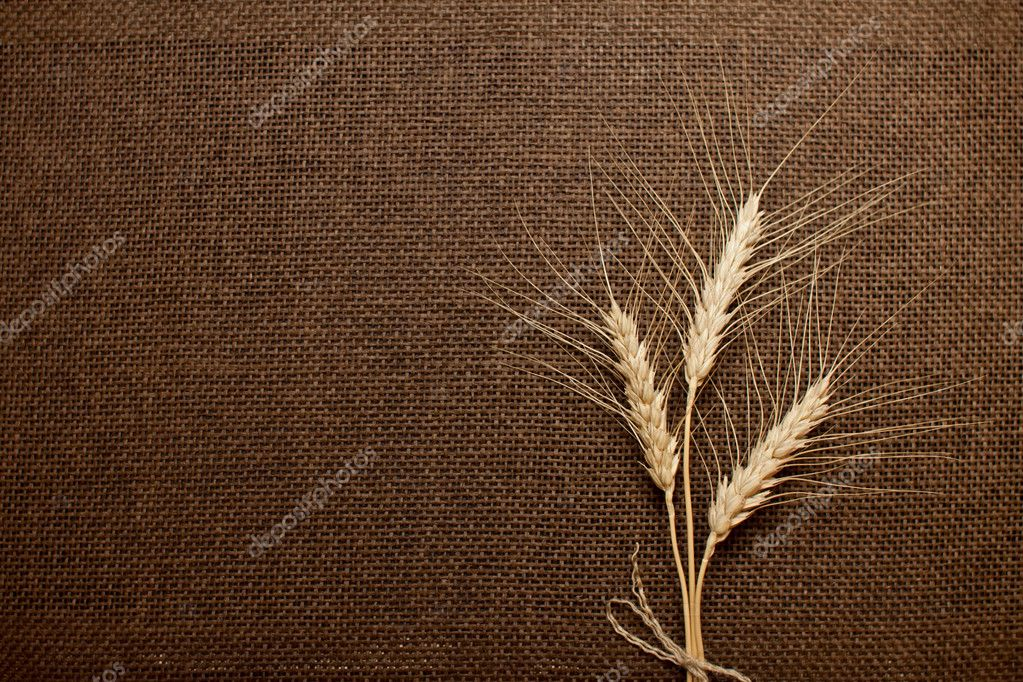 Wheat ears over brown canvas, hessian, burlap texture