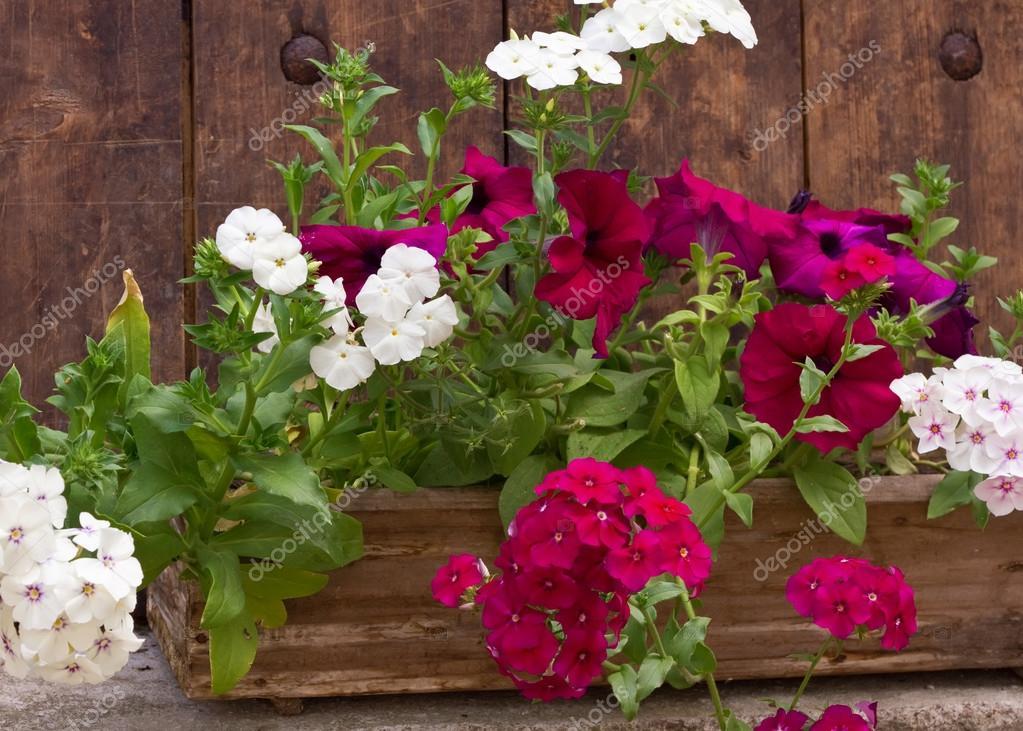 fleurs d 39 t en pot en bois photographie daffodil 24189487. Black Bedroom Furniture Sets. Home Design Ideas