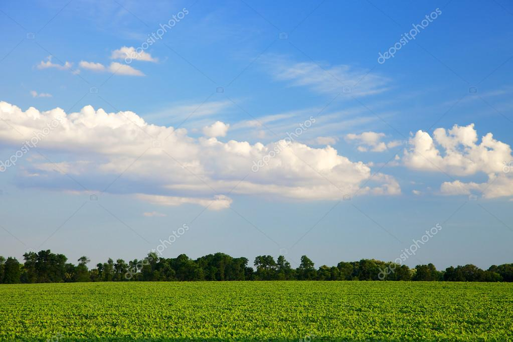 Beautiful open field and deep blue sky with clouds