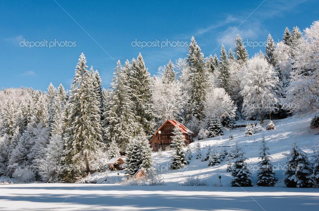 Winter forest in Carpathians