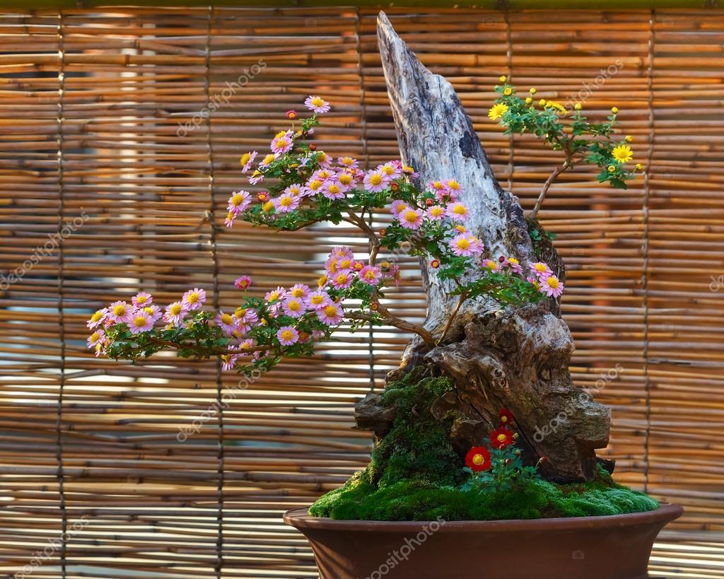 rbol de los bonsais peque o japon s en un jard n foto