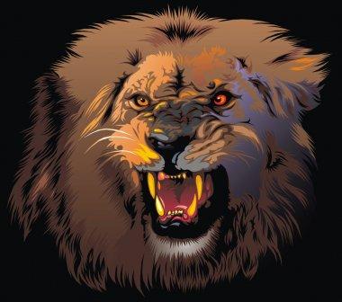 furious lion