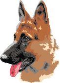 Fotografie Deutsche separd Hund Porträt