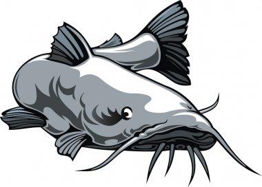 nice catfish